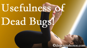 Poulin Chiropractic of Herndon and Ashburn finds dead bugs quite useful in the healing process of Ashburn back pain for many chiropractic patients.
